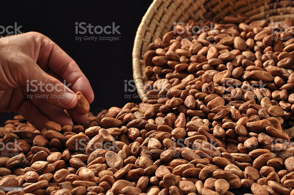 Raw cacao beans royalty-free stock photo
