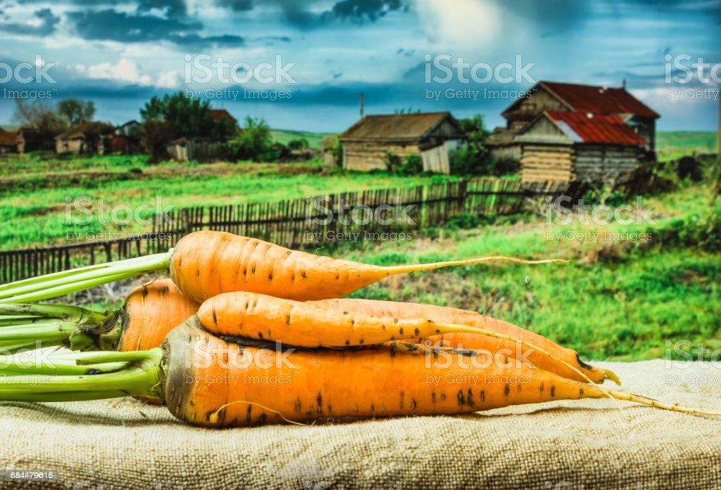 raw carrots stock photo