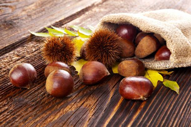 Raw chestnuts in burlap bag. stock photo