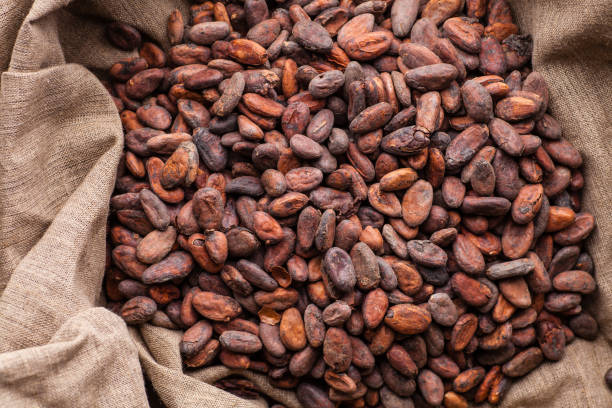 Raw cocoa beans in a sack Freshly harvested raw cocoa beans in a sack cocoa bean stock pictures, royalty-free photos & images