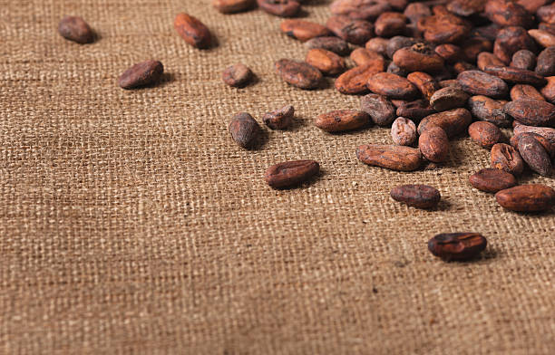 Raw cocoa beans on  sacking close-up stock photo