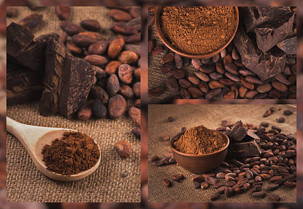raw cocoa or cacao beans stock photo