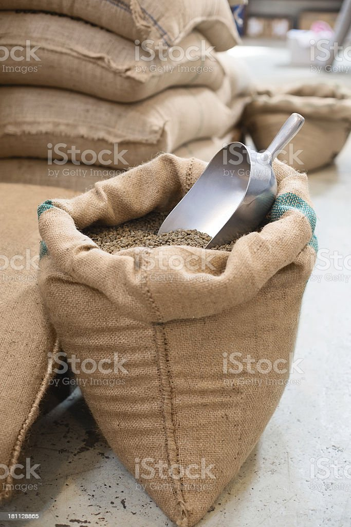 Raw coffee beans in a burlap sack royalty-free stock photo
