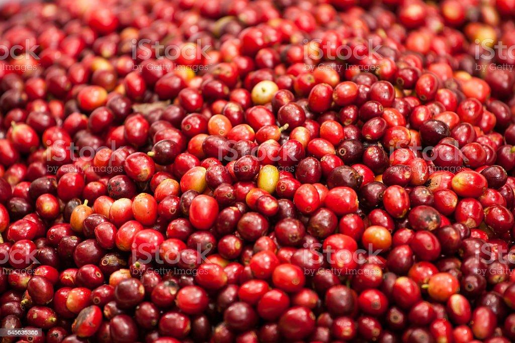 raw coffee seed stock photo