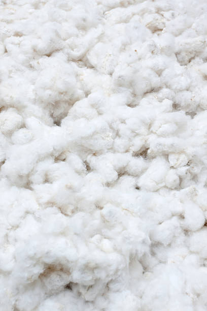 Raw Cotton Crops Raw cotton crops texture background cotton texture stock pictures, royalty-free photos & images