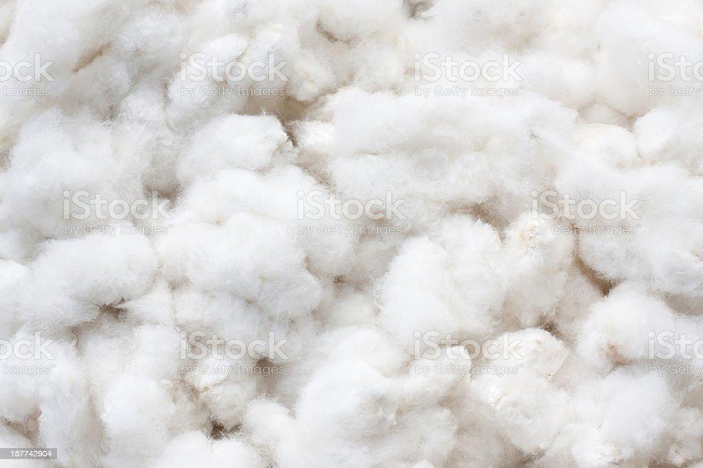Raw Cotton Crops - 免版稅一朵花圖庫照片