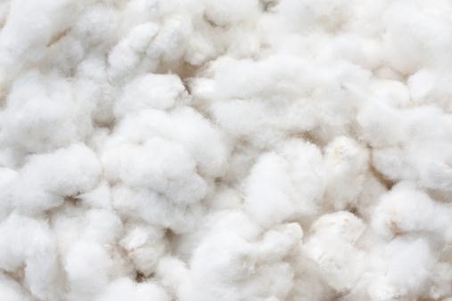 Raw Cotton Crops 照片檔及更多 一朵花 照片