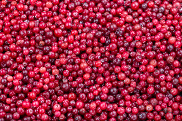 raw cranberries closeup scattered as a background. stock photo