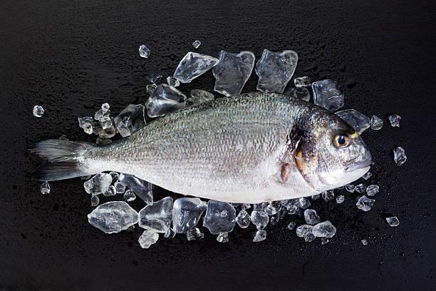 날것 dorade, 으깨짐 빙판 on 슬레이트 - 얼음 조각 뉴스 사진 이미지