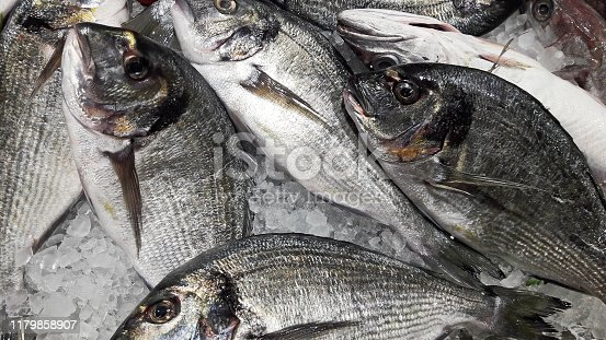 istock Raw Dorado Fish restaurant background. Fresh organic Sea Bream with ice. Top view. Gilt-head over dish ready to cooking 1179858907
