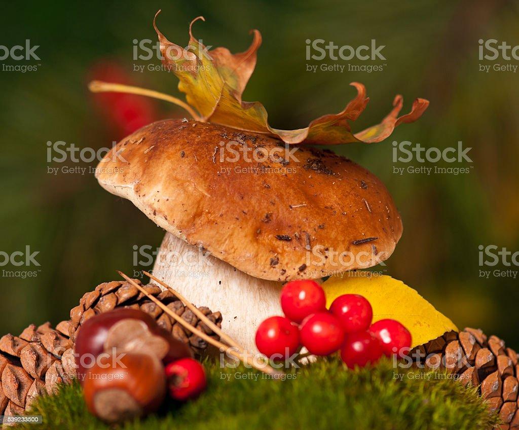 Raw edible mushroom stock photo
