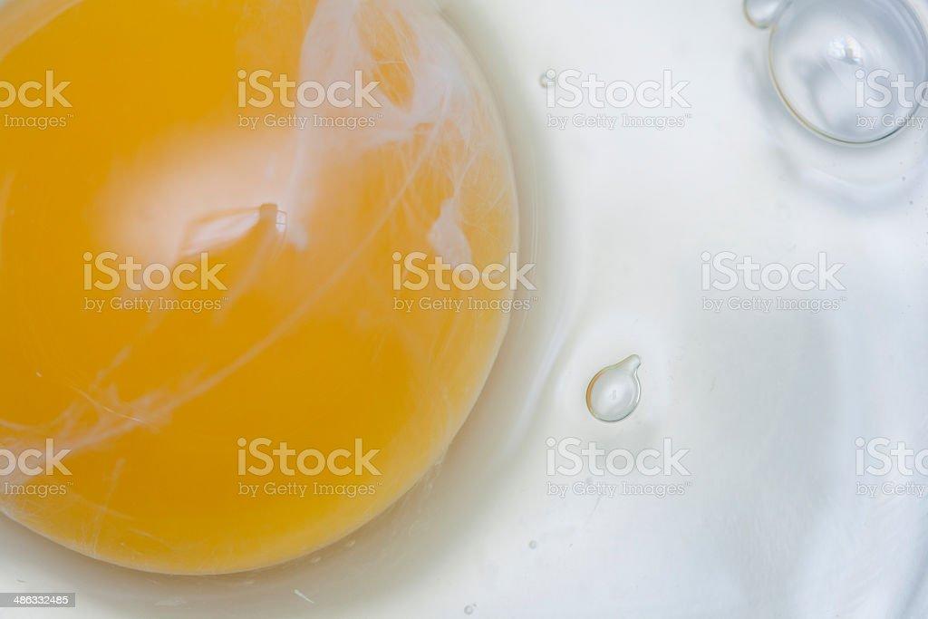 raw egg stock photo