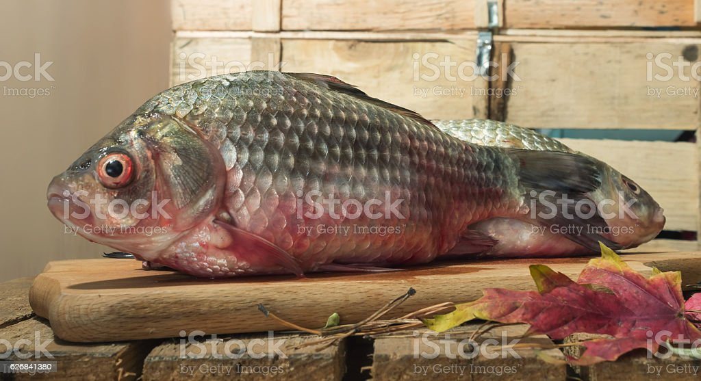 23+ Carp With Red Eyes PNG