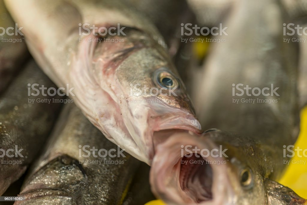 Peixe cru no mercado - Foto de stock de Alimentação Saudável royalty-free