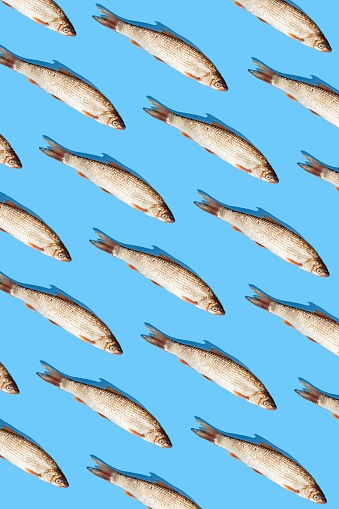 Raw fish pattern on blue background