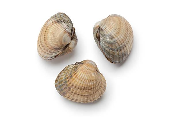 surowe świeże sercówka shells - mięczak zdjęcia i obrazy z banku zdjęć