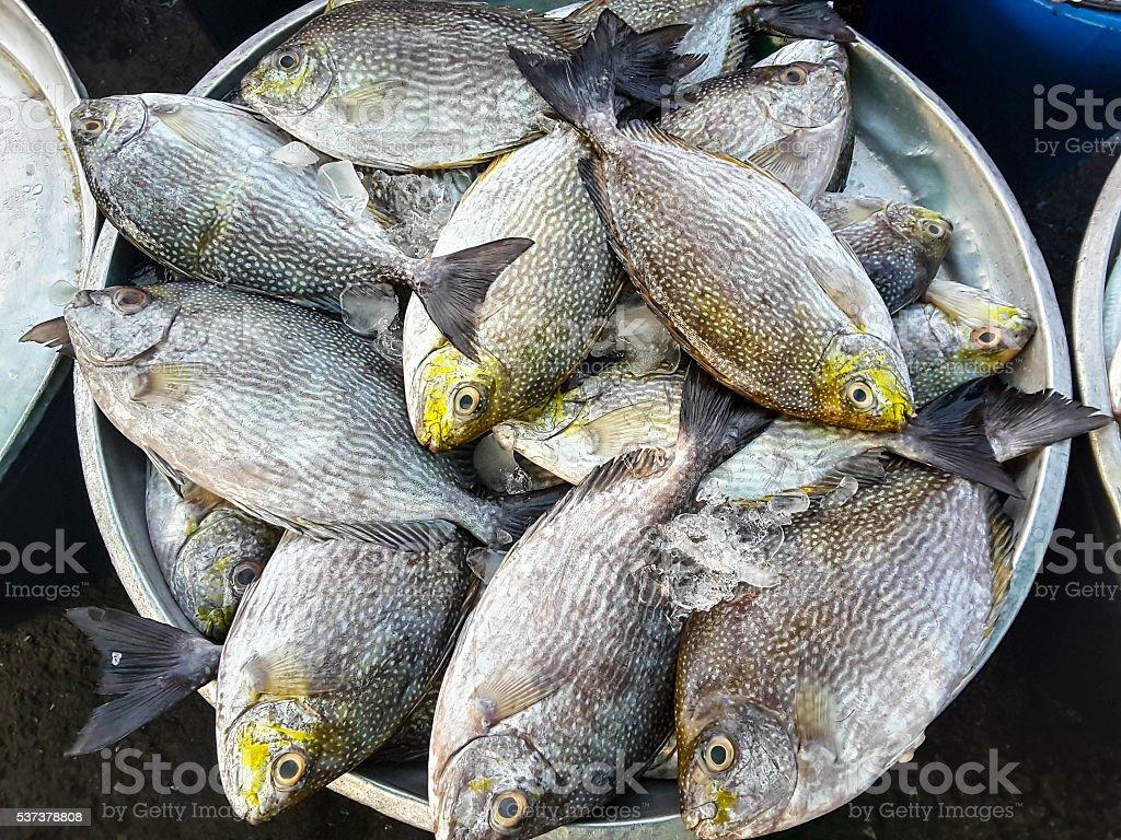 Сырой свежей рыбы на рынке морепродуктов стоковое фото