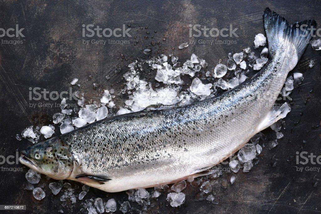 Crudo salmón orgánico fresco en el hielo foto de stock libre de derechos