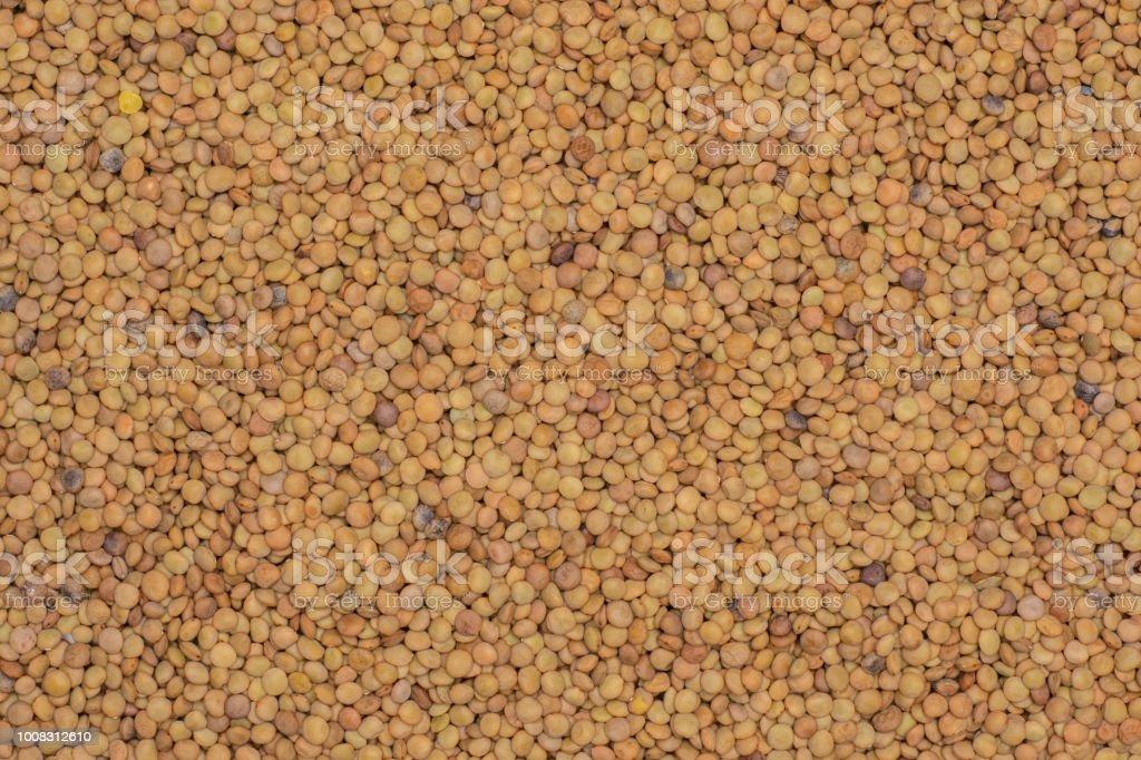 descripcion de la semilla de lenteja