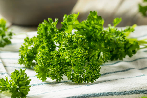 raw green organic curly parsley - parsley stock photos and pictures