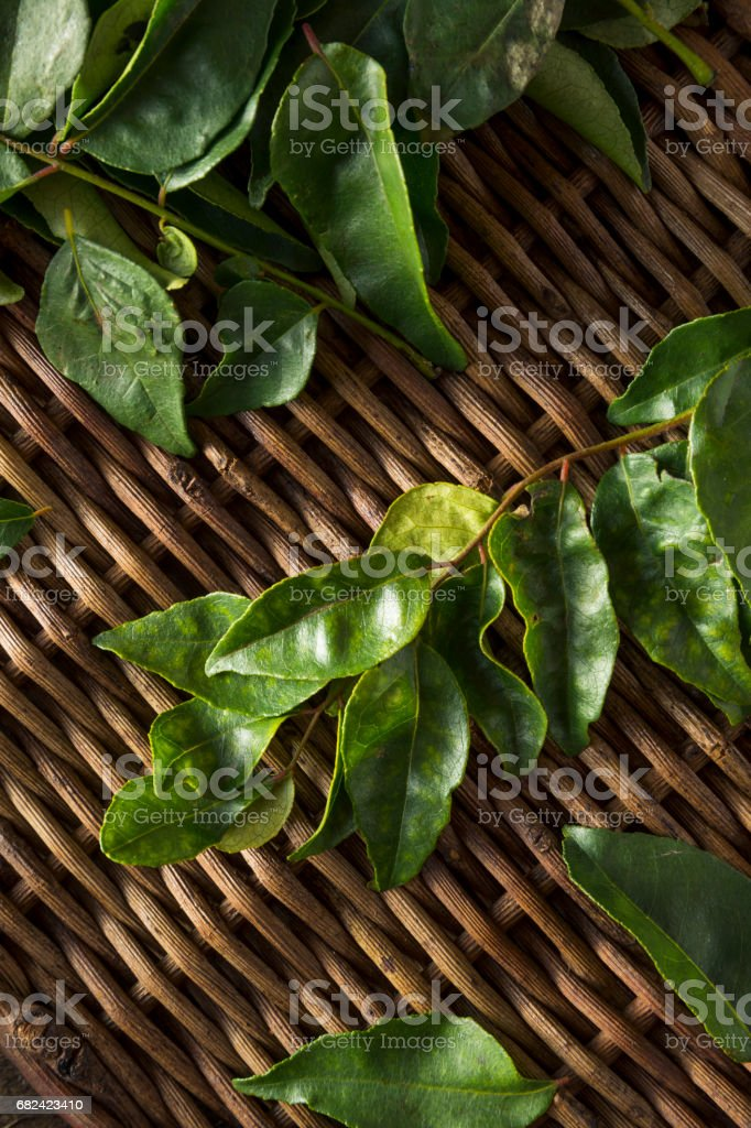 Raw Green Organic Curry Leaves royalty-free stock photo
