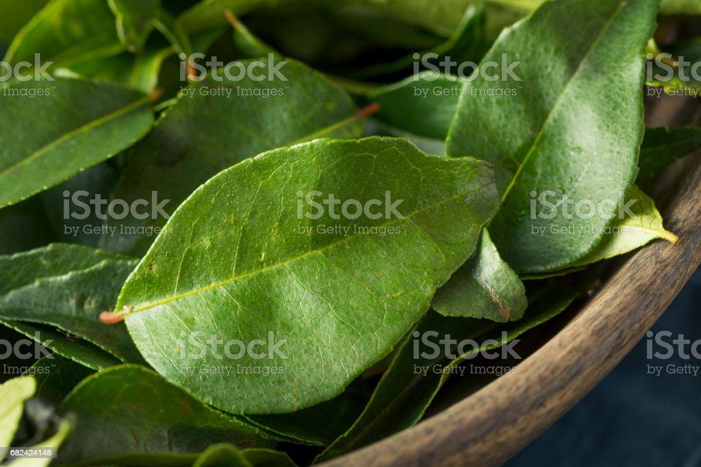Feuilles de Curry bio vert cru photo libre de droits