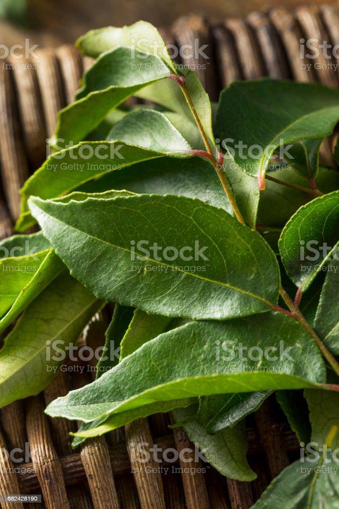 生綠色有機咖喱葉 免版稅 stock photo