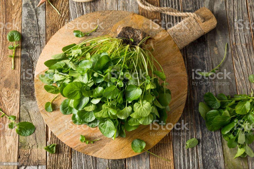 Berro de agua cruda vida orgánica verde - foto de stock