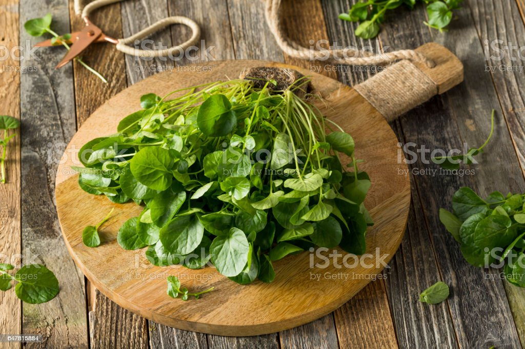 Raw Green Organic Living Water Cress stock photo