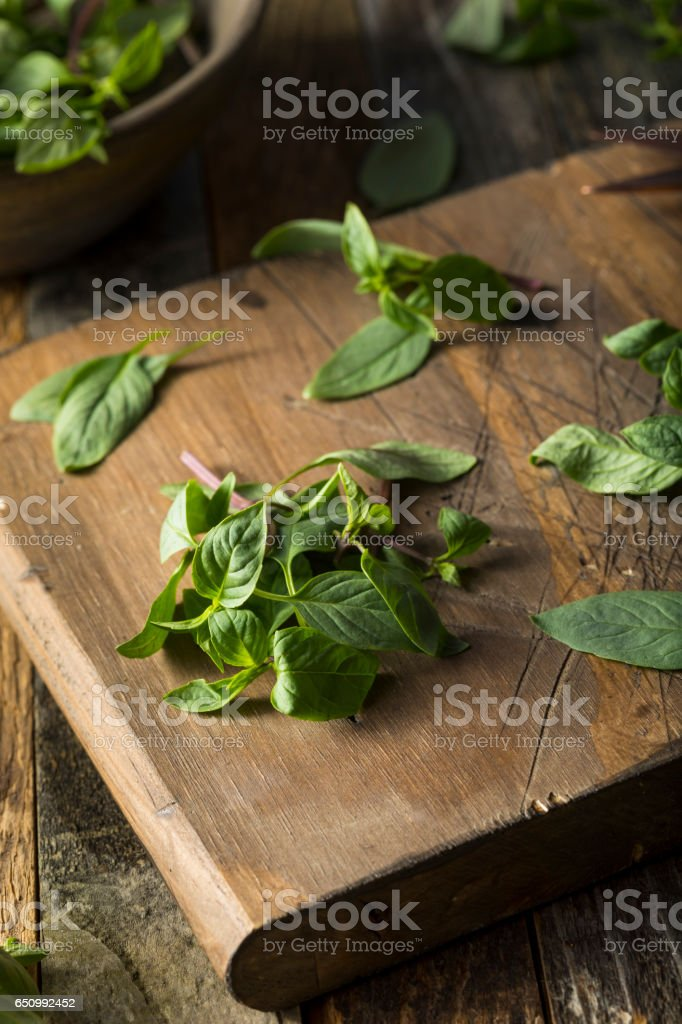 Raw Green Organic Thai Basil stock photo