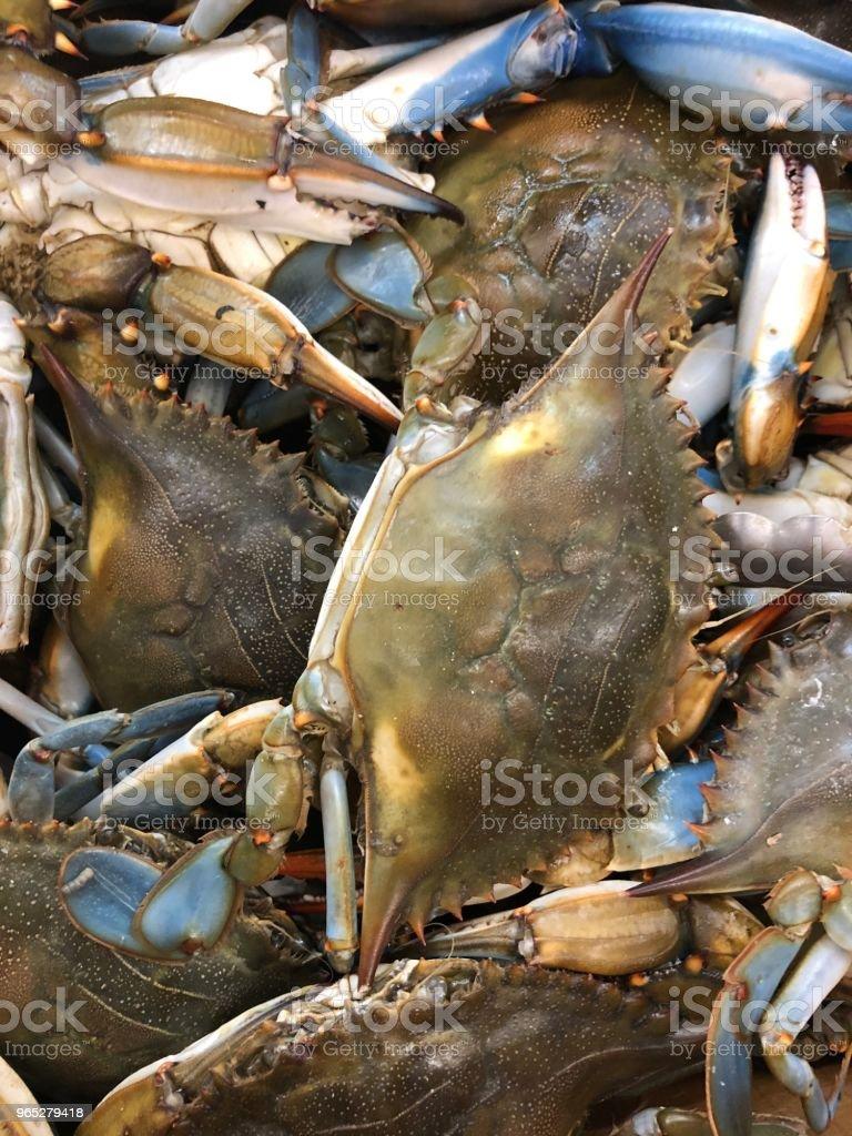 Raw live crab zbiór zdjęć royalty-free