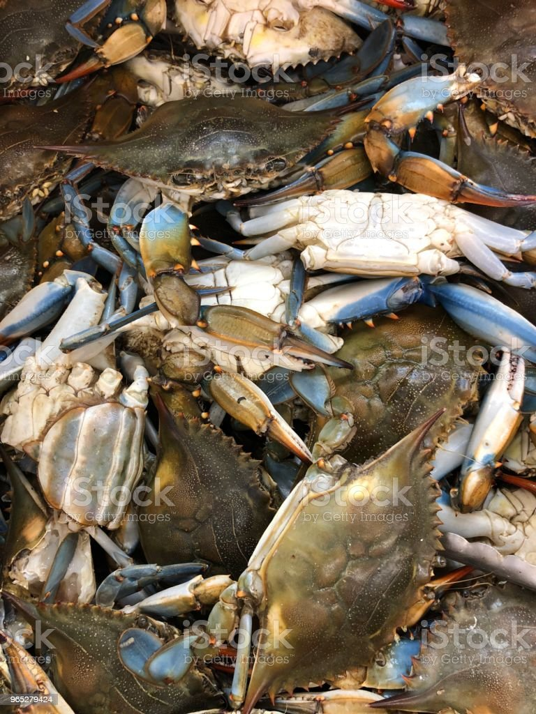 Raw live crab royalty-free stock photo