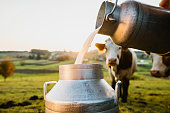 istock Raw milk being poured into container 1297005860