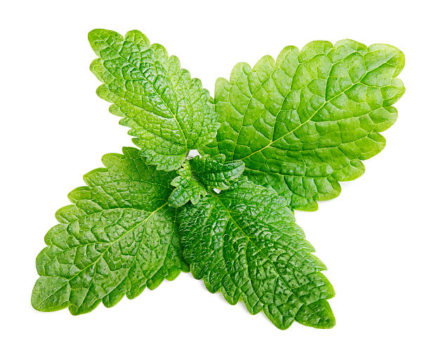 Raw mint or green lemon balm leaves (Melissa officinalis) stock photo