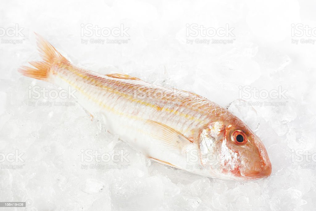 Raw mullet royalty-free stock photo