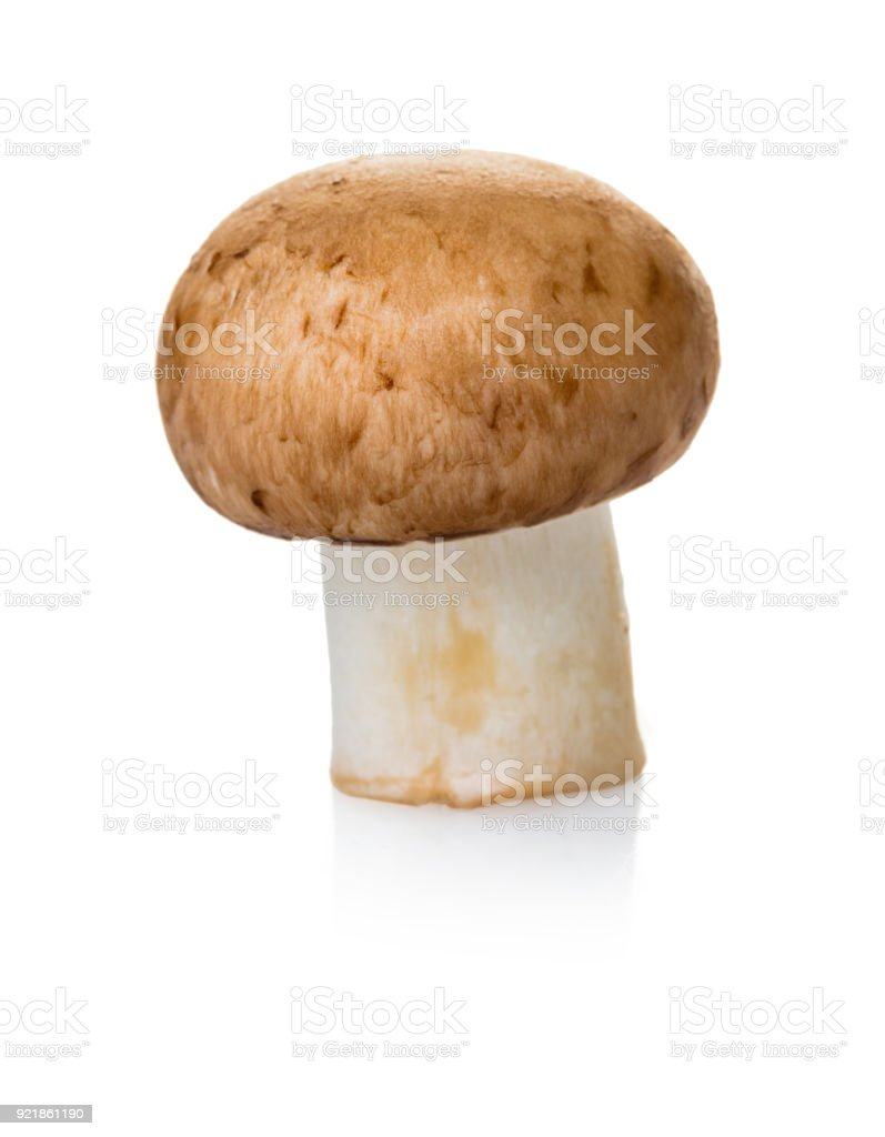 raw mushroom champignon stock photo
