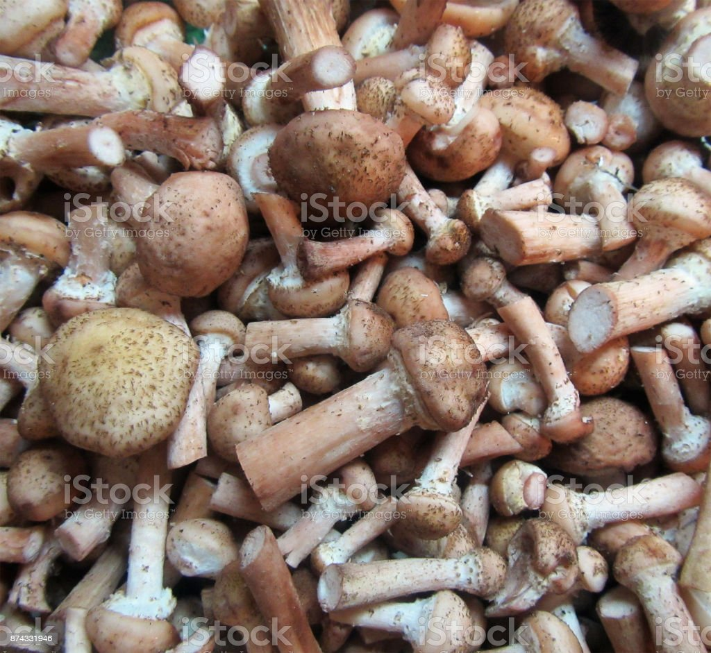 Raw mushrooms background stock photo