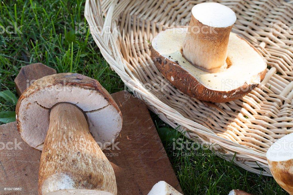 Raw Mushrooms stock photo