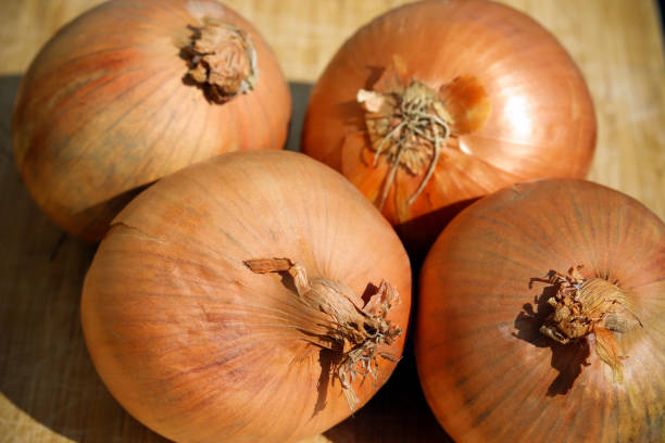 Raw onions on wooden board stock photo