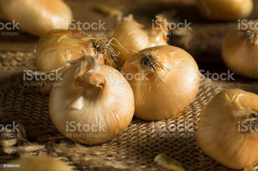 Raw Organic Cipollini Onions stock photo