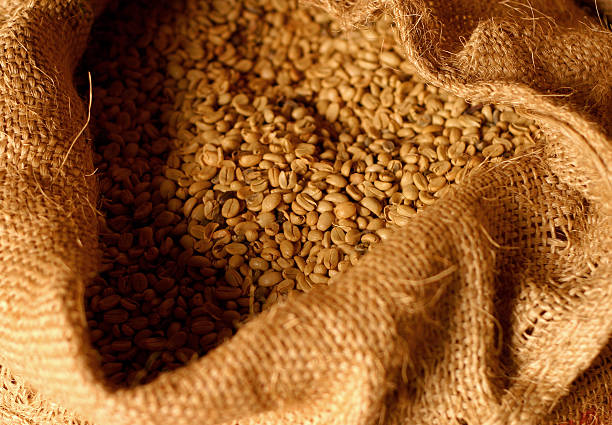 Raw organic coffee, Veracruz, Mexico. Raw / unroasted organic coffee in a hessian sack  Jalapa, Veracruz, Mexico. (Selective shallow focus) veracruz stock pictures, royalty-free photos & images