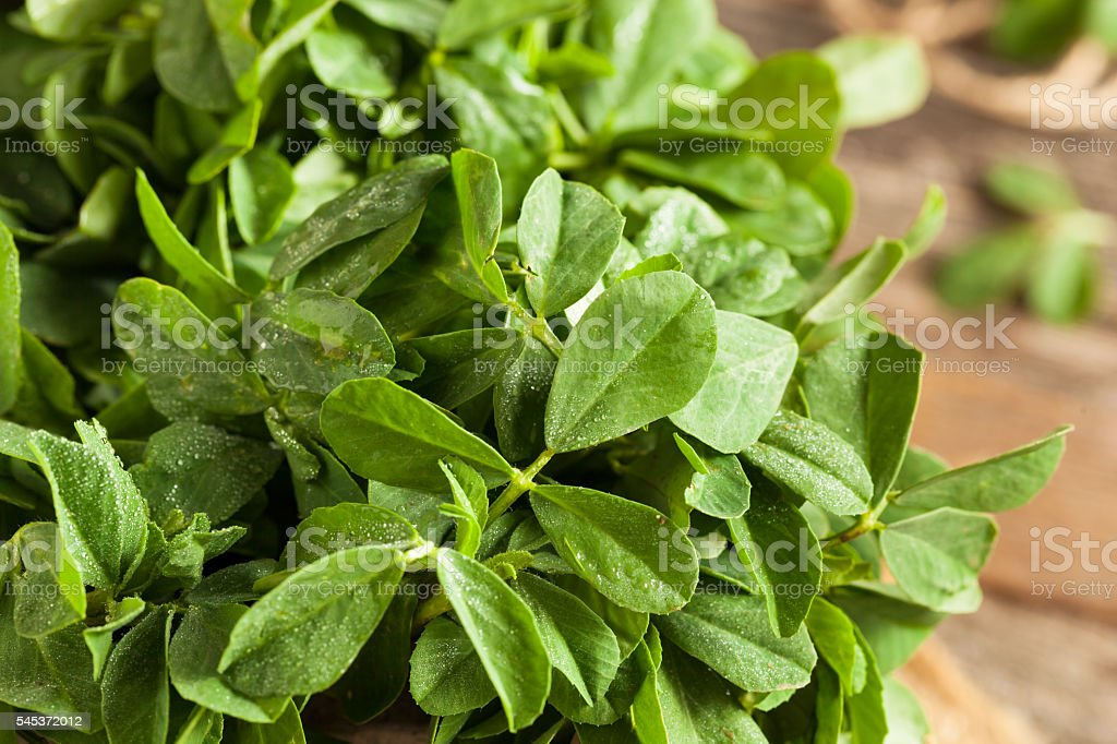 Raw Organic Fenugreek Methi Leaves stock photo