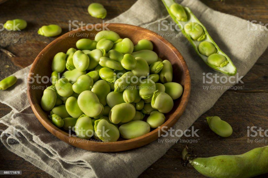 Raw Organic Fresh Green Fava Beans photo libre de droits