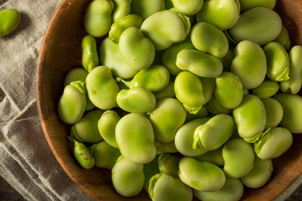 Raw Organic Fresh Green Fava Beans Raw Organic Fresh Green Fava Beans REady to Cook With plant pod stock pictures, royalty-free photos & images