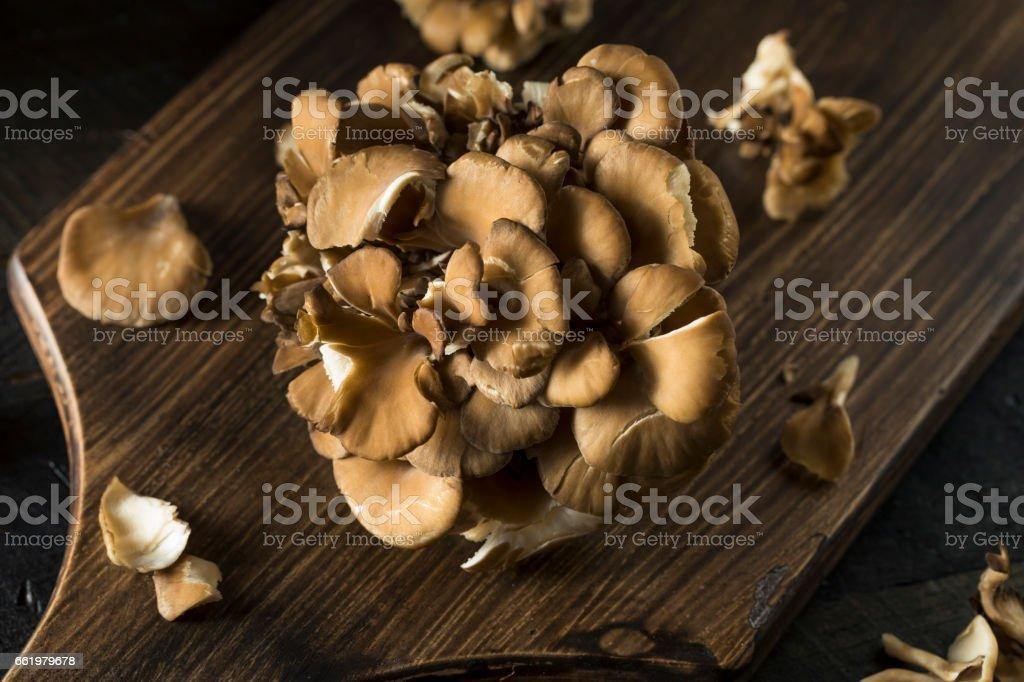 Raw Organic Maitake Mushrooms royalty-free stock photo