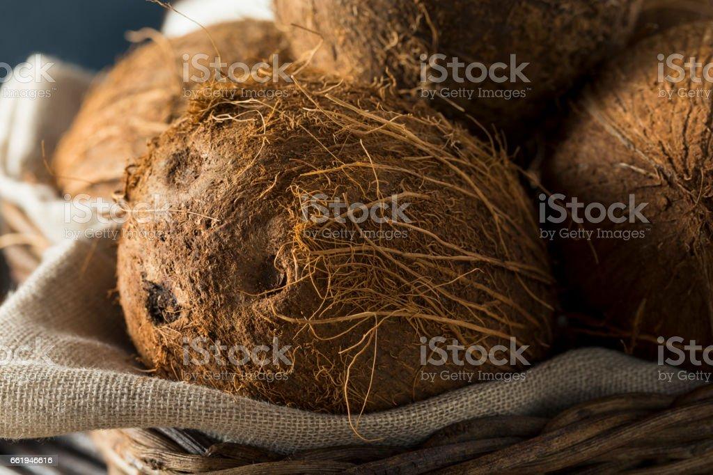 Raw Organic Tropical Brown Coconuts stock photo
