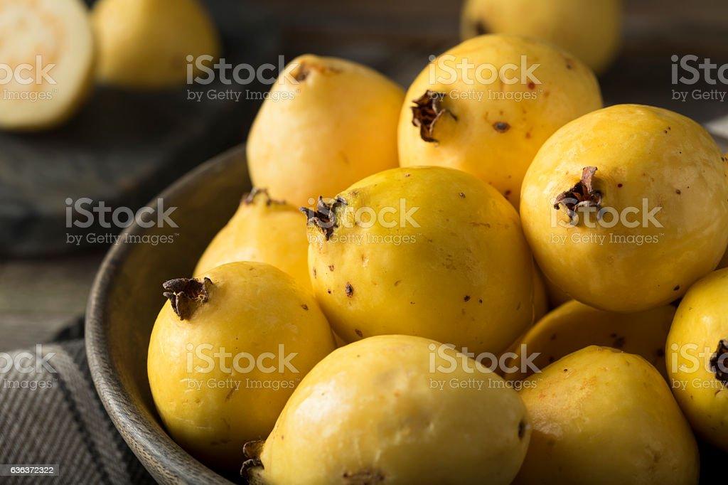 Raw Organic Yellow Guava Fruit stock photo