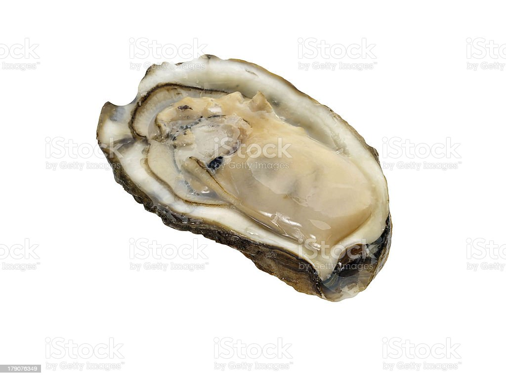 Raw oyster royalty-free stock photo