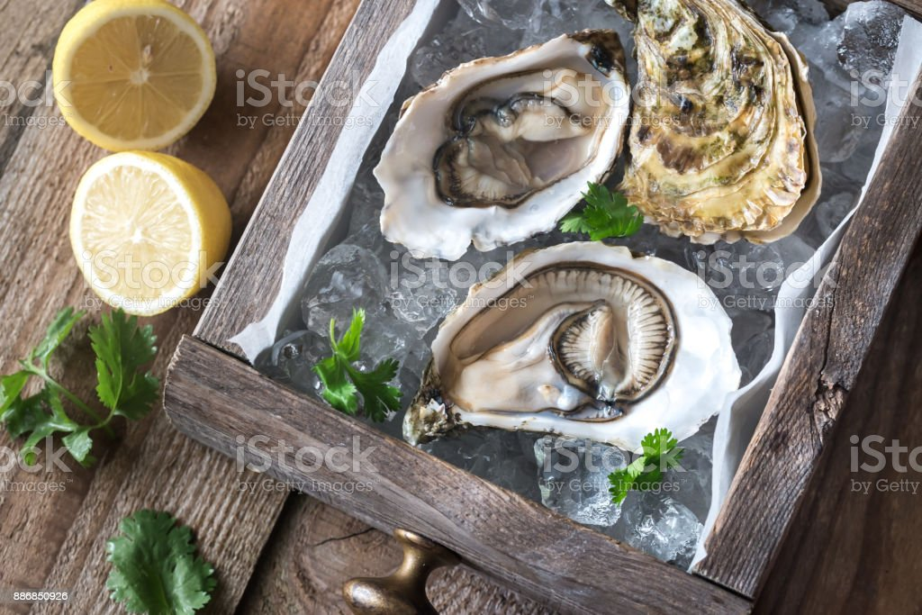 Raw oysters in the wooden box stock photo