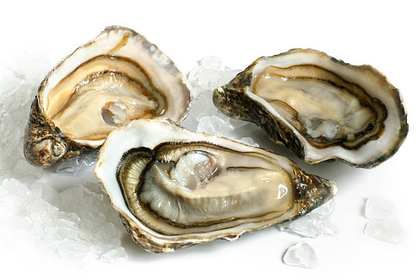 raw oysters with ice - oyster stock pictures, royalty-free photos & images
